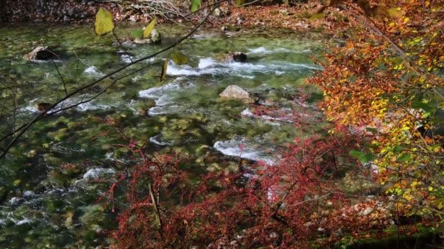 Autumn barberry bush and beech twig near alpine rapid river
