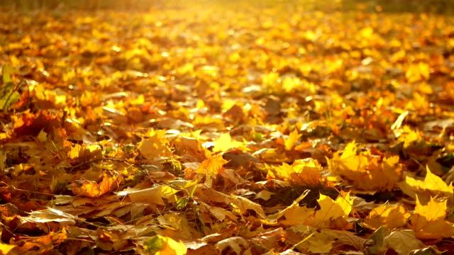 Autumn beautiful nature autumnal video