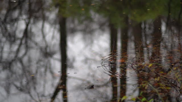 Autumn beauty of fallen leaves on rippled water