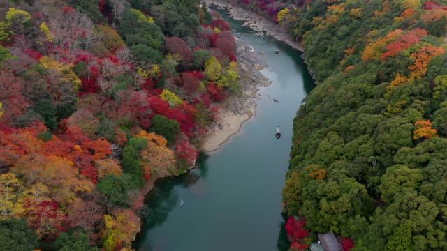 sonbahar güzelliği - ultra yüksek çözünürlüklü televizon stok videoları ve detay görüntü çekimi