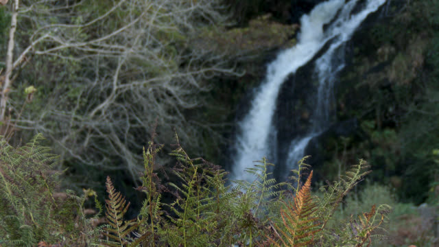 Autumn bracken with a waterfall in the background 4K footage shot at 50fps and interpreted at 25fps to give a slow motion dumfries and galloway stock videos & royalty-free footage