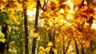 istock Autumn branch in HD 473039961