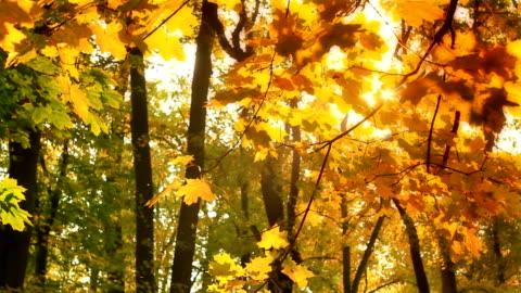 vídeos de stock e filmes b-roll de ramo de outono em hd - folha