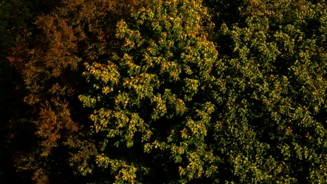 осень, панорамирование камеры - дубовый лес стоковые видео и кадры b-roll