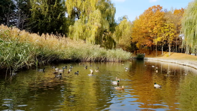 Autumn city park. Park in the fall video