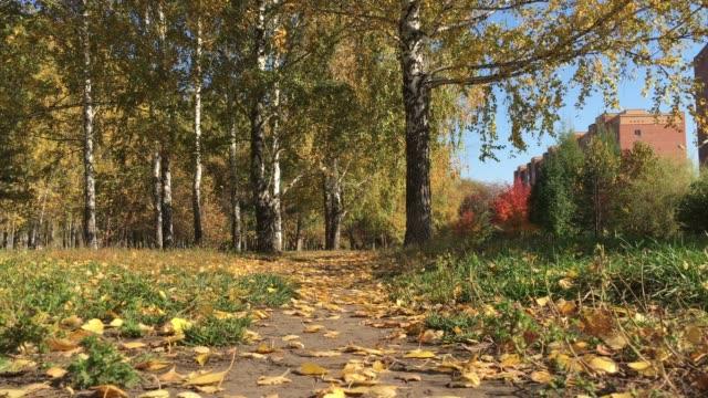 Autumn Cityscape video