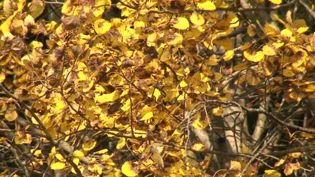 vídeos de stock, filmes e b-roll de cores do outono 14 - condado de pitkin