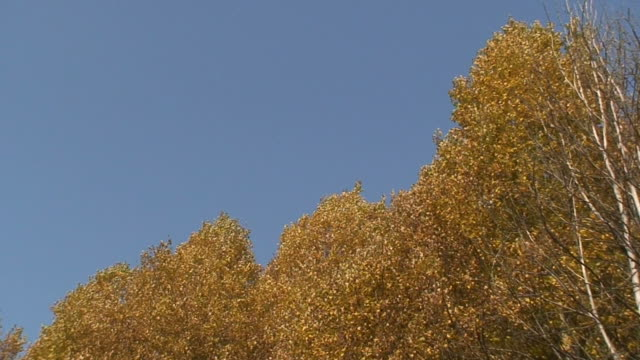vídeos de stock, filmes e b-roll de cores do outono 15 - condado de pitkin