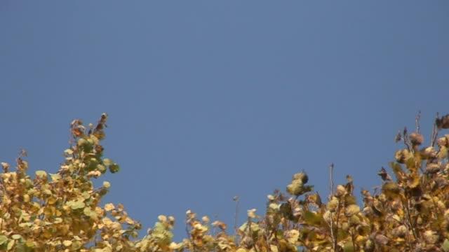 vídeos de stock, filmes e b-roll de cores do outono 16 - condado de pitkin
