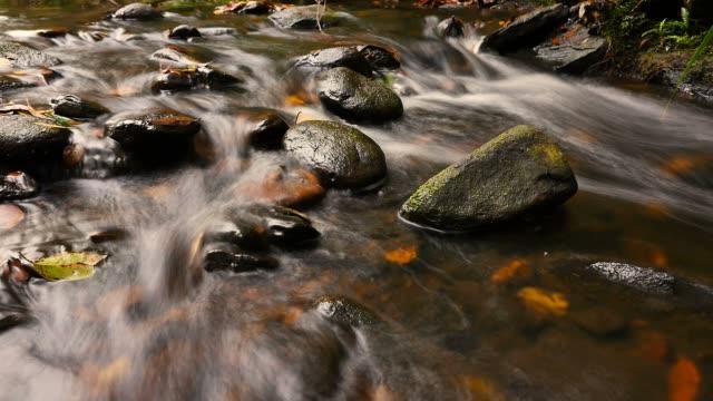 colori autunnali flusso di acqua dolce di creek più piccola cascata - cespuglio tropicale video stock e b–roll