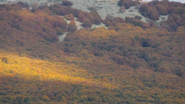 autumn colors, forest trees video