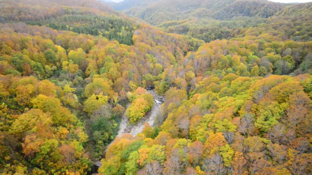 Autumn Colors of Jogakura Gorge, Aomori City, Northeastern Japan – film