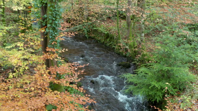Autumn coloured leaves in Scottish woodland in south west Scotland