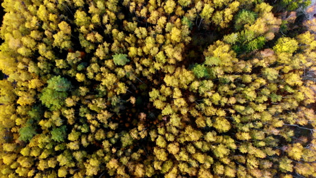 Autumn Colourful Forest From Above, Captured with Drone. Fall Orange, Green, Yellow, Red Leaves Trees Woods. Aerial View Flying Above Stunning Colorful Treetops with Bright Leaves on Sunny Day.