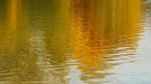 Bидео Autumn daylight landscape reflected in water