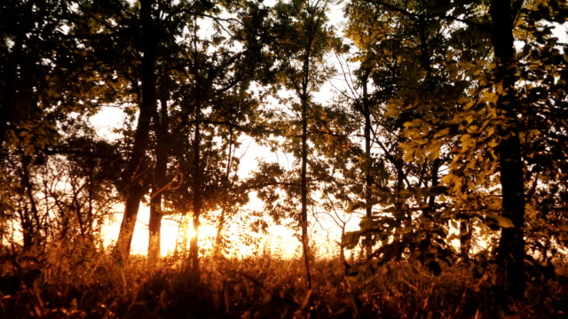 Autumn deciduous forest at dawn or sunrise video