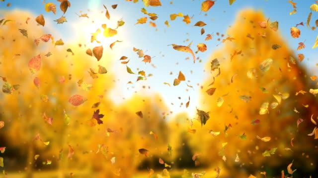 Autumn Fall Leaves Sideways - Realistic Falling Leaves Video Background Loop video