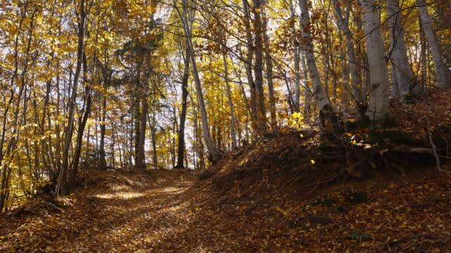 Jesień Jesień z liści żółty – film