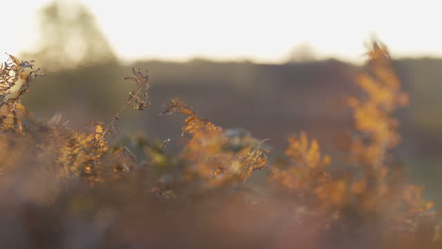 Autumn Fern leaves