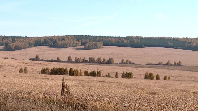 vídeos de stock e filmes b-roll de autumn fields of wheat in the urals - berma da estrada