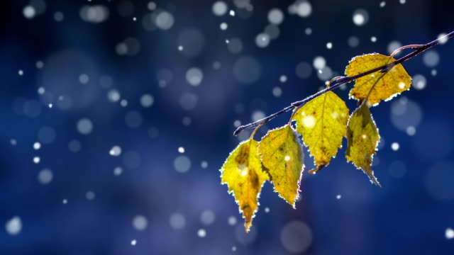 herbst erste schnee-endlos wiederholbar - schneeflocke sonnenaufgang stock-videos und b-roll-filmmaterial