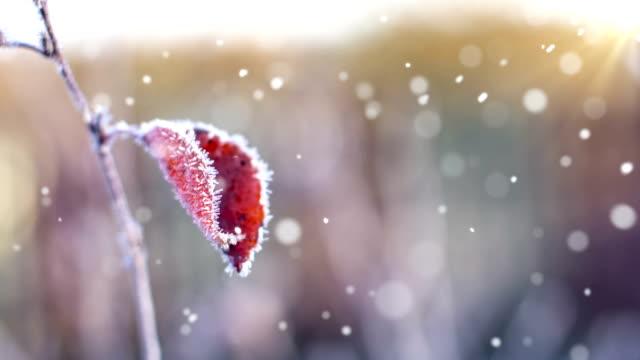 herbst erste schnee-endlos wiederholbar - laub winter stock-videos und b-roll-filmmaterial