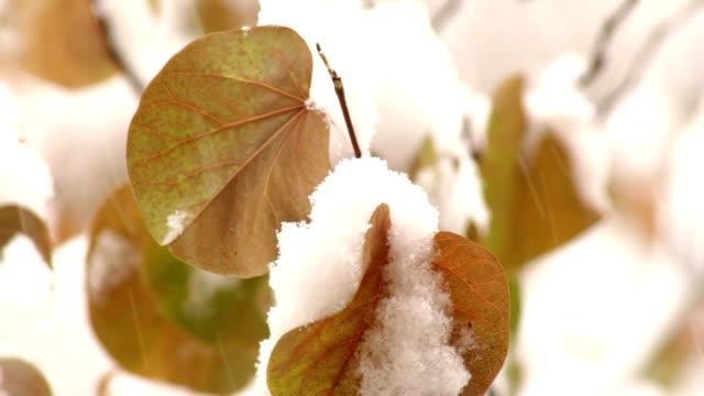 Autumn first snow video