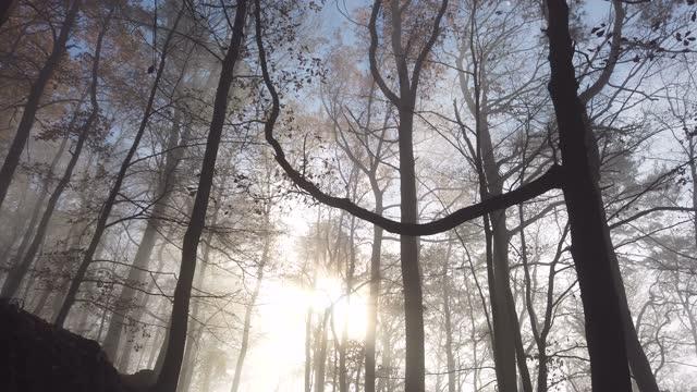 nebbia autunnale nella foresta con raggi del sole, time lapse - albero spoglio video stock e b–roll