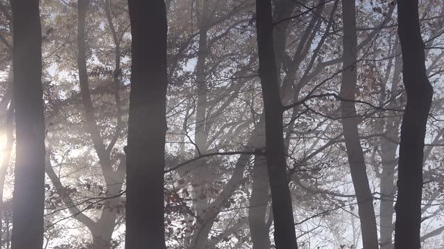 nebbia autunnale nella foresta con raggi del sole - albero spoglio video stock e b–roll
