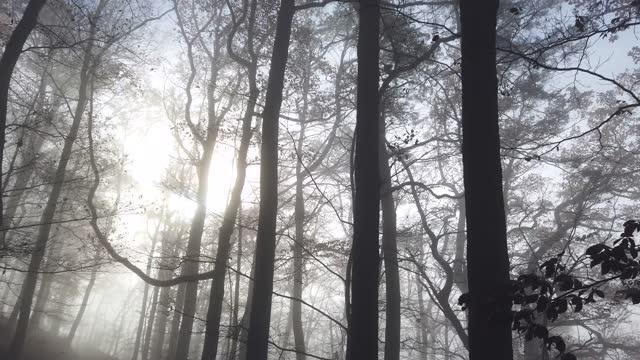 nebbia autunnale nella foresta con raggi del sole con gimbal - albero spoglio video stock e b–roll