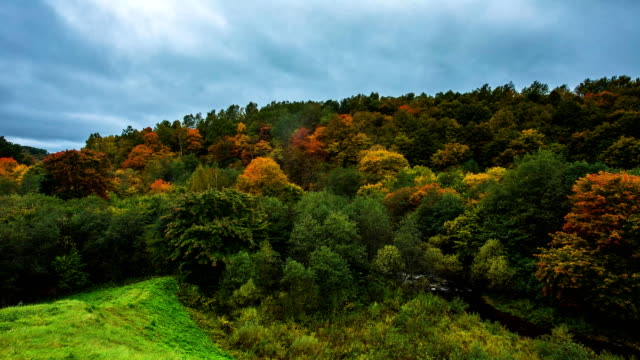 Autumn foliage time lapse with cloudscape in Lithuania, Europe video
