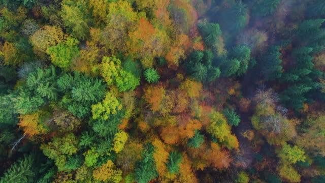 autumn forest aerial drone view. waterfall, lakes in plitvice national park, croatia - национальный парк плитвицкие озёра стоковые видео и кадры b-roll