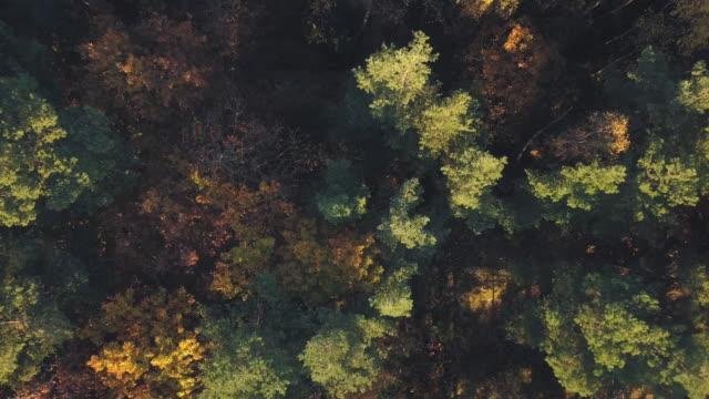 autumn forest aerial view - drewno tworzywo filmów i materiałów b-roll