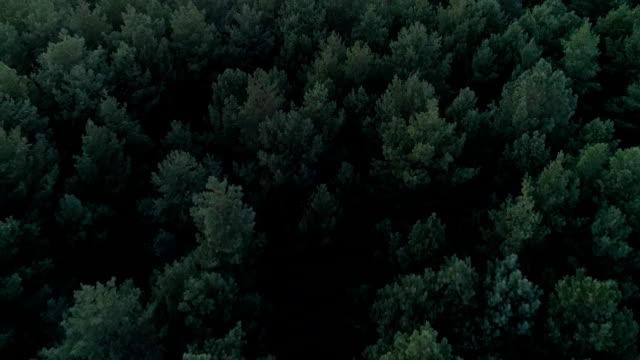 hösten skogen vid solnedgången från ett fågelperspektiv - skymning bildbanksvideor och videomaterial från bakom kulisserna
