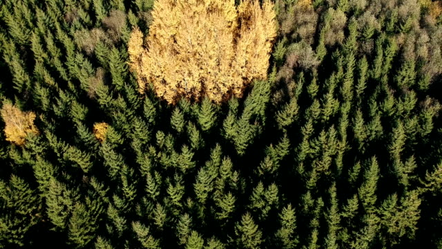 autumn forest colors, nature background aerial view - lituania video stock e b–roll