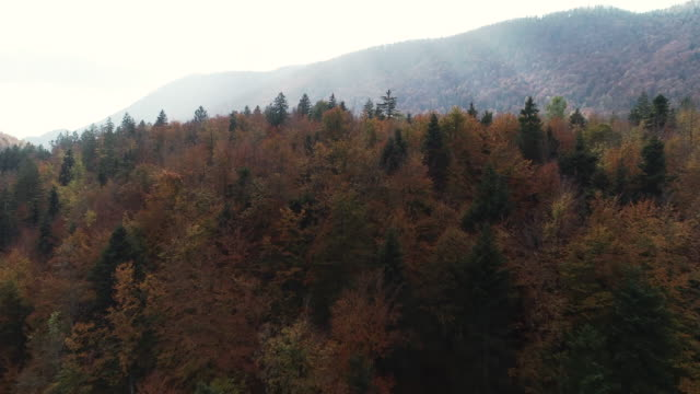Autumn Forest From Drone Point of View Autumn Forest From Drone Point of View. b roll stock videos & royalty-free footage
