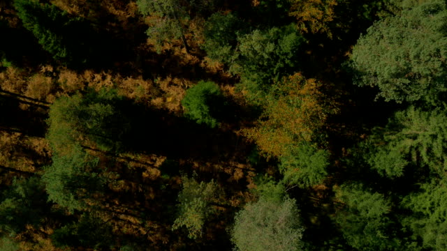 AERIAL: Autumn forest in bird's perspective video