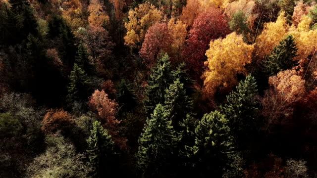 vídeos de stock, filmes e b-roll de floresta de outono em dia ensolarado. as folhas coloridas e verde spurce de vista vertical - nordeste