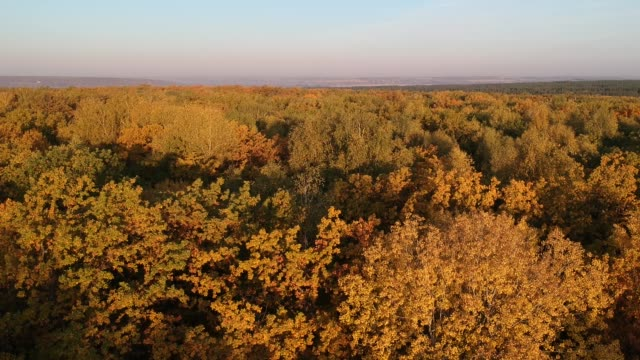 autumn forest. shooting from the drone. - forest bathing video stock e b–roll
