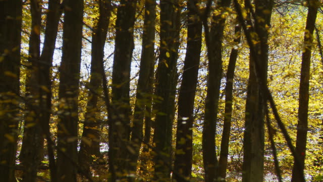 HD DOLLY: Autumn Forest With Lake In Background video