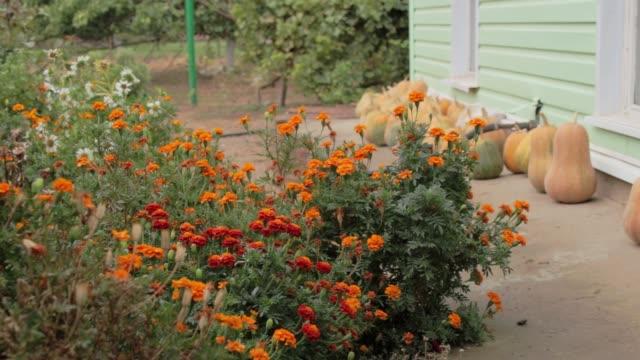 雨上がりの花の秋の庭。収穫。自然は冬の準備をしている - 花壇点の映像素材/bロール
