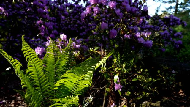 Autumn Gardens in High Park - video