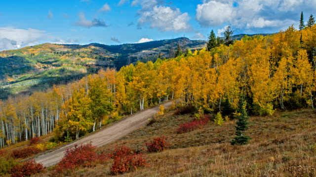 autumn golden valley - time-lapse video of autumn clouds rolling over a golden aspen grove in a mountain valley, routt national forest, steamboat springs, colorado, usa. - вечнозелёное дерево стоковые видео и кадры b-roll