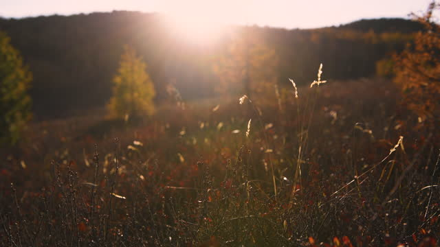 autumn grass in the mountains at sunset. - vivid 4k video stock videos & royalty-free footage