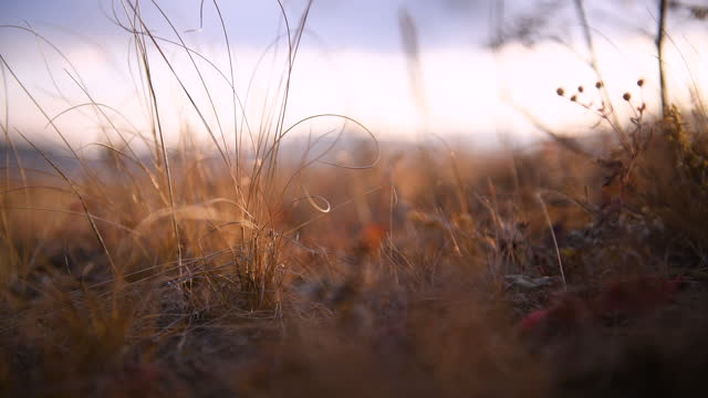autumn grass on the forest meadow at sunset - vivid 4k video stock videos & royalty-free footage