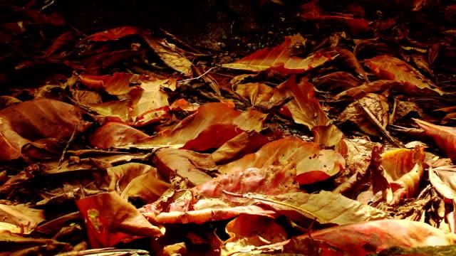 autunno. terra è coperto da foglie secco. - colore saturo video stock e b–roll