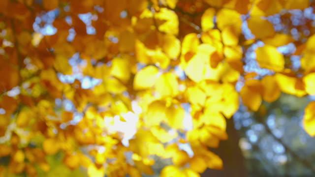 vídeos de stock, filmes e b-roll de impressões de outono - bela folhagem de outono - mudam de foco - setembro amarelo