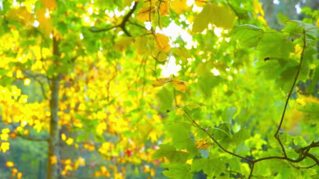 vídeos de stock, filmes e b-roll de impressões do outono - bela cena de parque outono - setembro amarelo