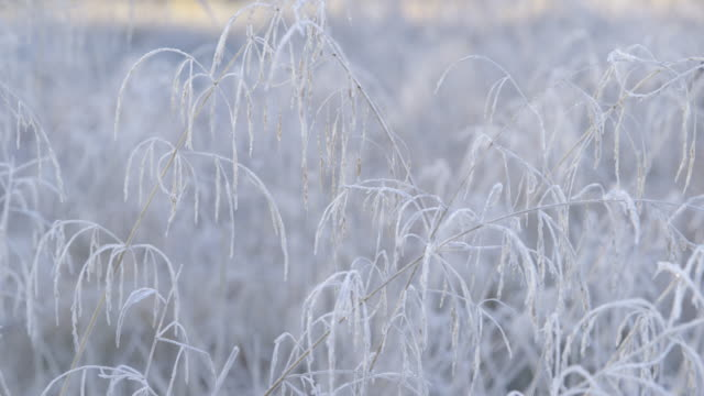vídeos de stock e filmes b-roll de autumn impressions - beautiful hoarfrost-covered grass on a cold autumn morning - camera pan - geada