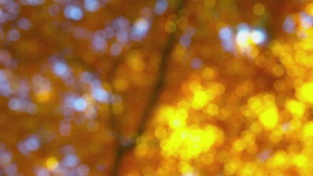 vídeos de stock, filmes e b-roll de impressões de outono - linda exuberante folhagem de outono na luz solar - mudam de foco, prores - setembro amarelo